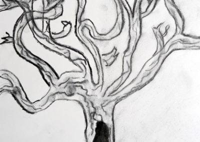 Charcoal Tree Drawing, by Discovering Your Art Student, age 10