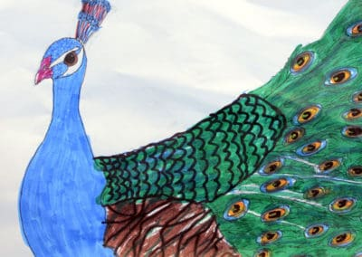 Peacock Drawing, age 11